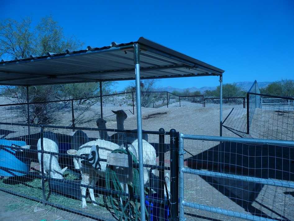 Alpaca Pens For Sale In AZ.