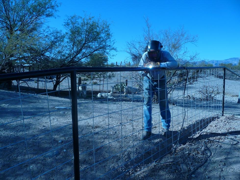 Alpaca Ranches in Arizona