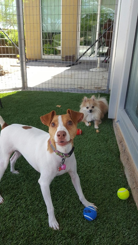 Gilbert Dog Kennels AZ